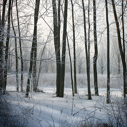 Winter Morning (2124)